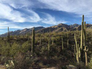 Saguaro Reisebericht Arizona